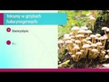 Czym różnią się od siebie grzyby halucynogenne?