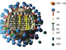 Cząsteczka wirusa grypy