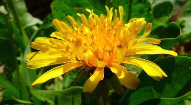 http-pixabay-com-en-dandelion-wildflowers-close-meadow-6296_9a00.jpg