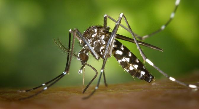 http-pixabay-com-en-tiger-mosquito-mosquito-49141_9e52.jpg