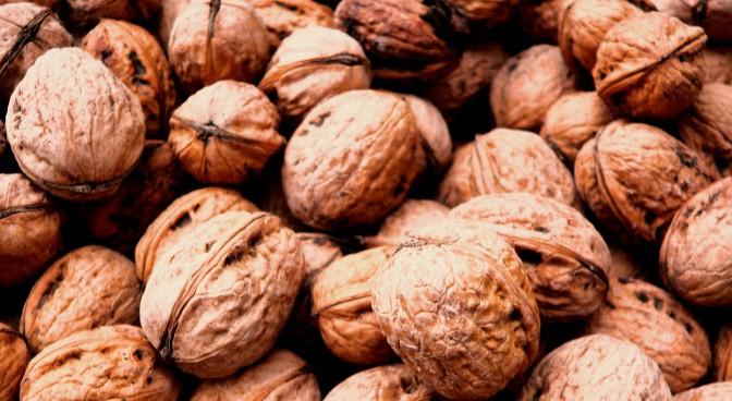 http-pixabay-com-en-walnut-still-life-fruit-autumn-193639_975b.jpg