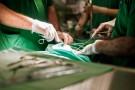 Krzyżowy przeszczep nerek - po raz pierwszy w Polsce