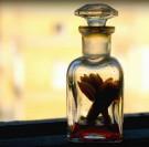 Komponowanie zapachów perfum - galeria
