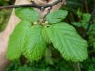 Najgorsze rośliny dla alergików