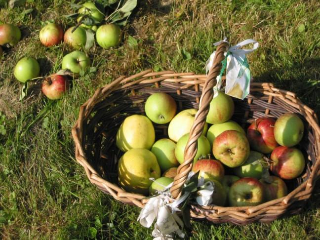 Żywność ekologiczna (prezentacja edukacyjna)